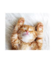 servetele akiniu lesiu valymui albinex katinelis poilsiauja