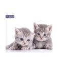 servetele akiniu lesiu valymui albinex katineliai